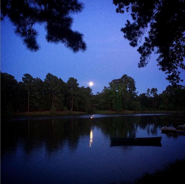 pine cove moon